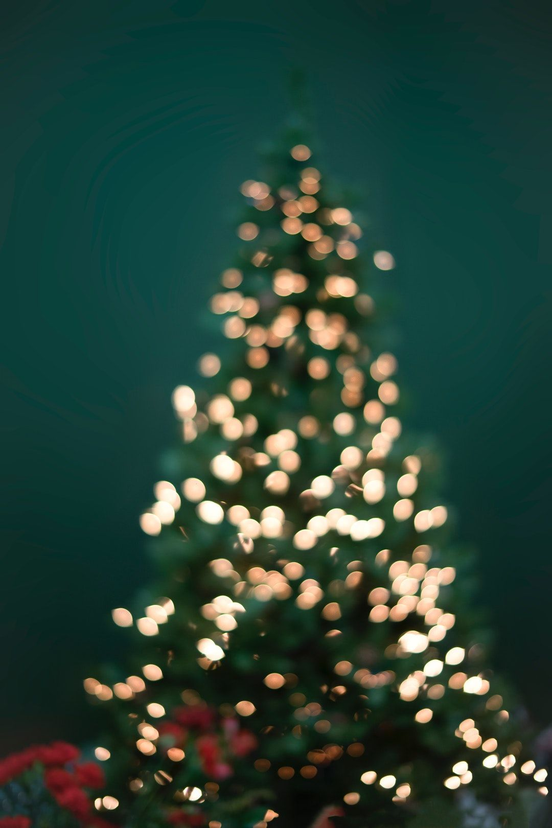 1080x1620 Christmas Tree Pictures [HQ]   Download Free Images on Unsplash
