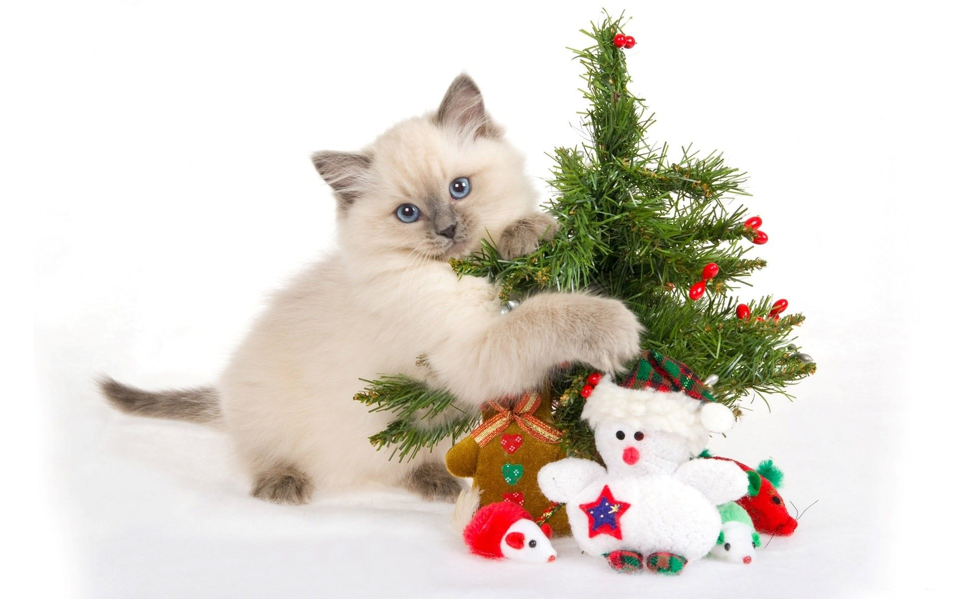 1920x1200 Nice Cute Cat with Christmas Tree Wallpaper   HD Wallpapers