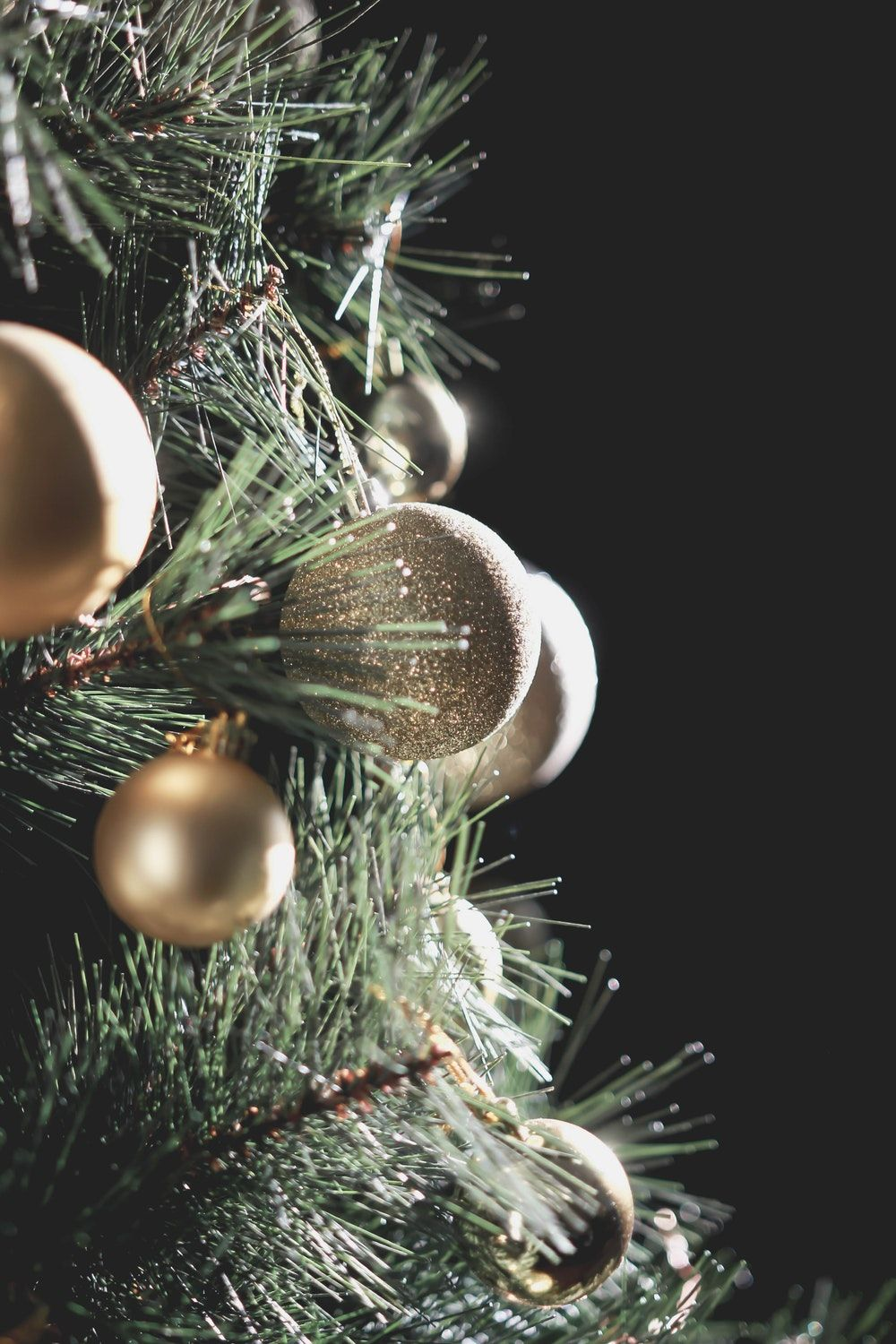 1000x1500 Christmas Tree Pictures [HQ]   Download Free Images on Unsplash