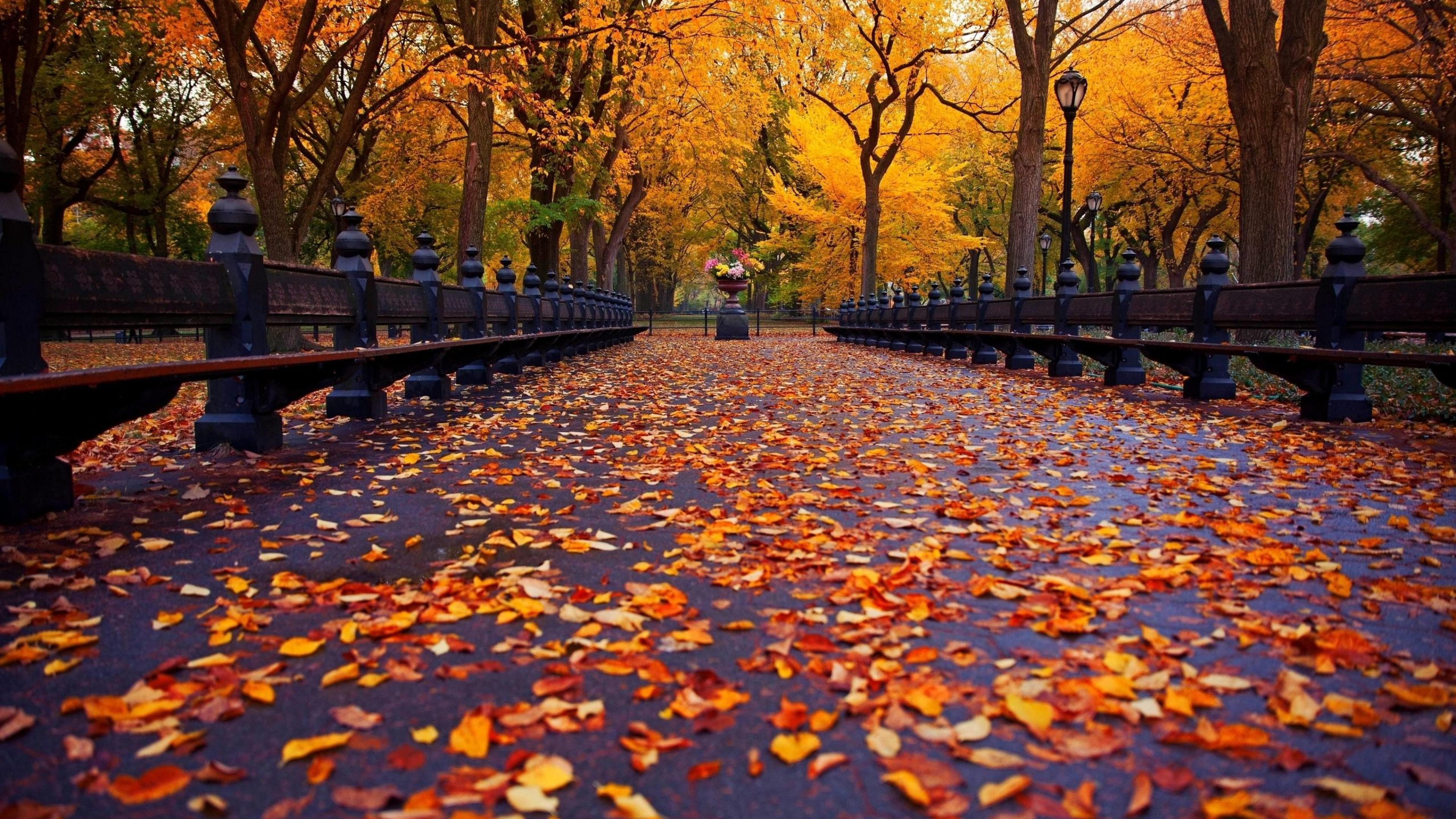 3840x2160 Fall Nature Leaf Autumn HD Wallpapers, Desktop Backgrounds, Mobile ...