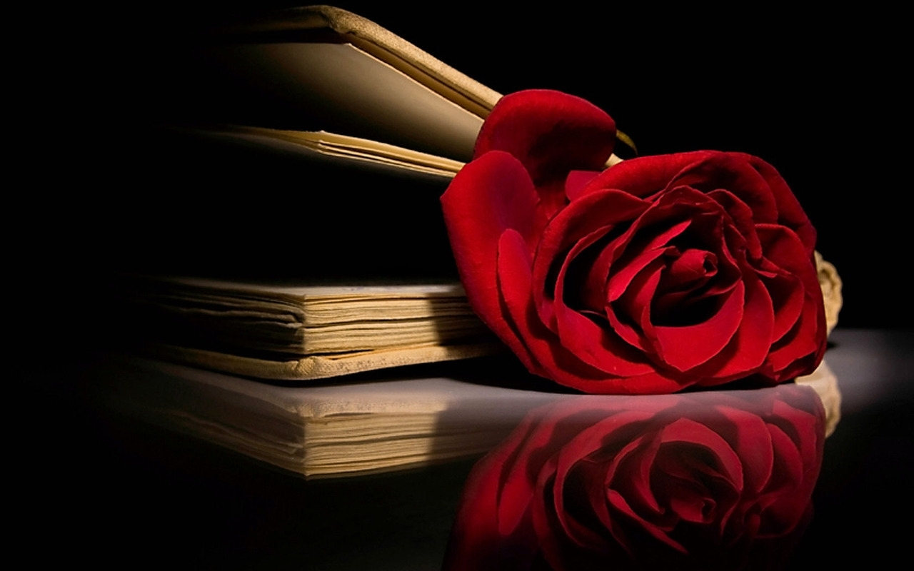 1280x800 Roses images Red, Red Rose HD wallpaper and background photos (11662034)