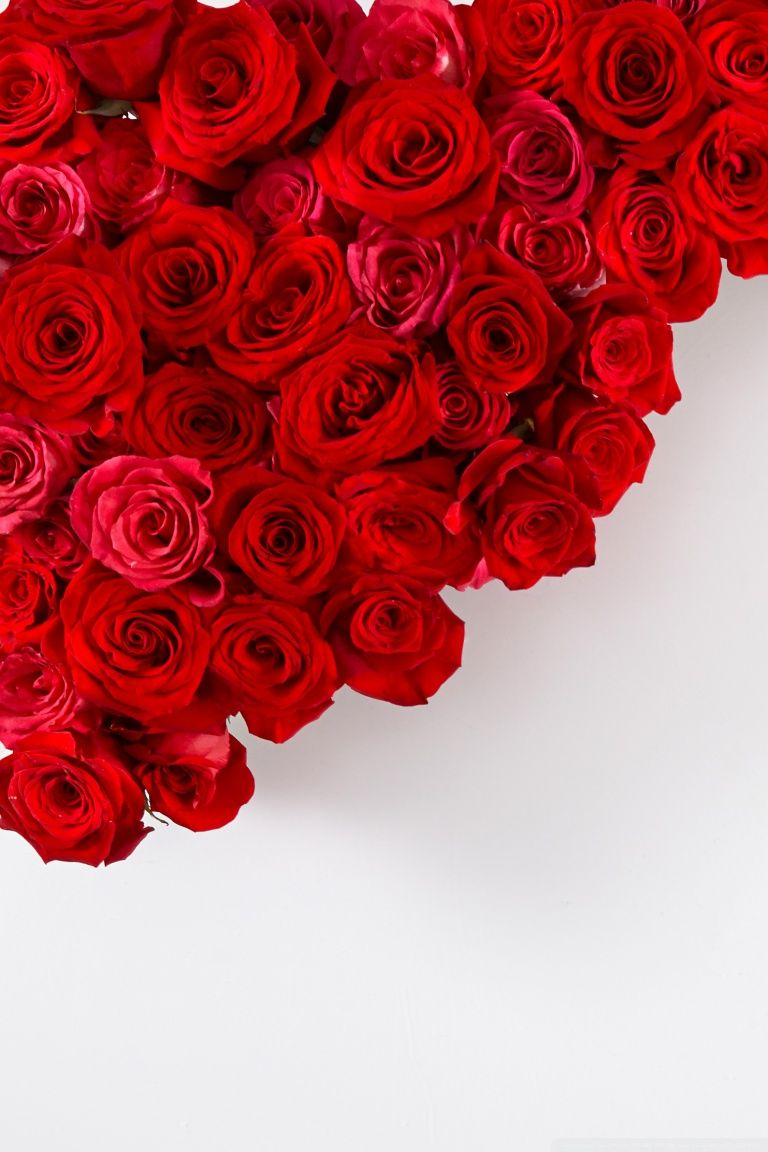 768x1152 Red Roses on White Background ❤ 4K HD Desktop Wallpaper for • Wide ...