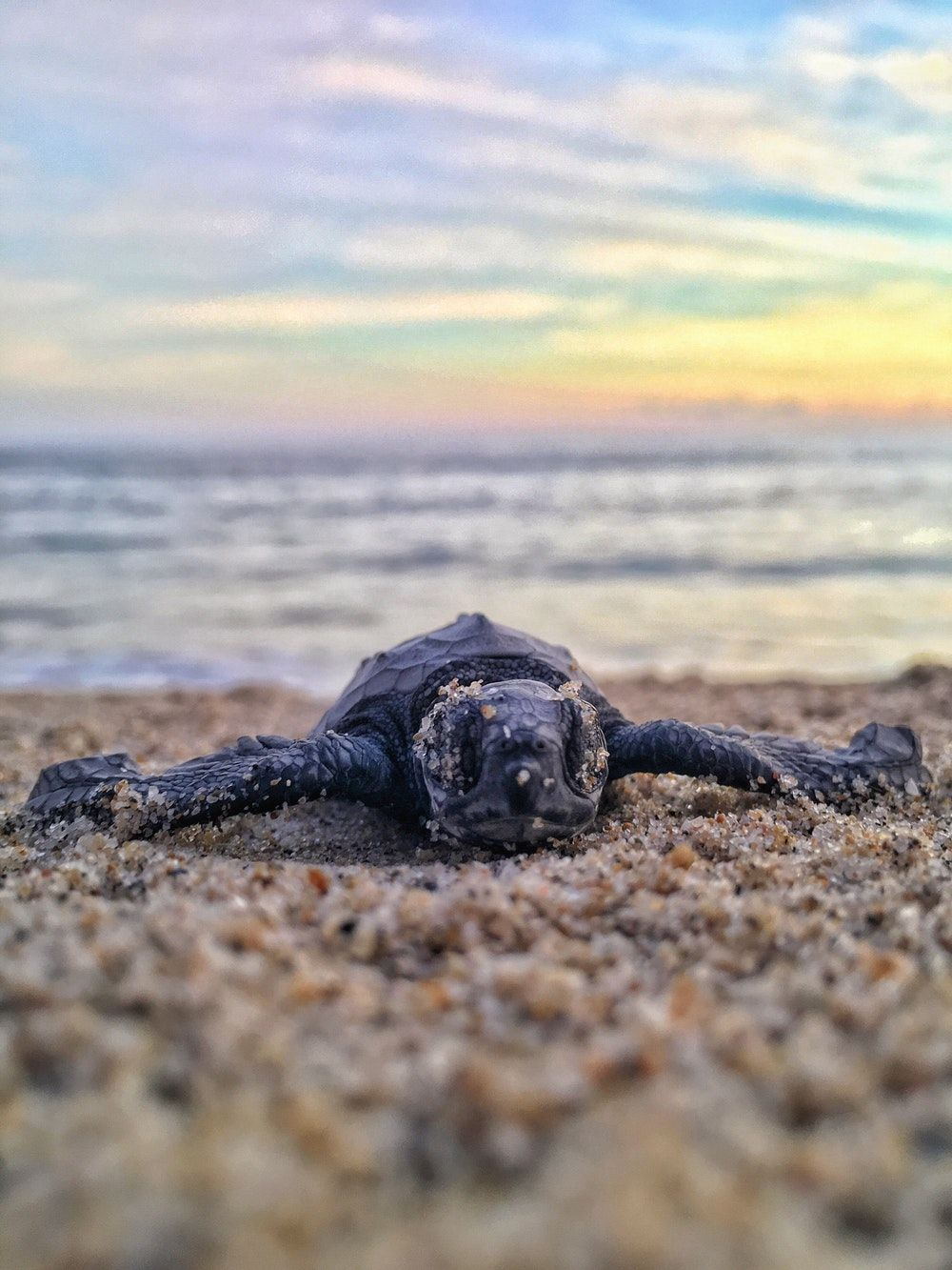 1000x1333 500+ Baby Sea Turtle Pictures [HD] | Download Free Images on Unsplash