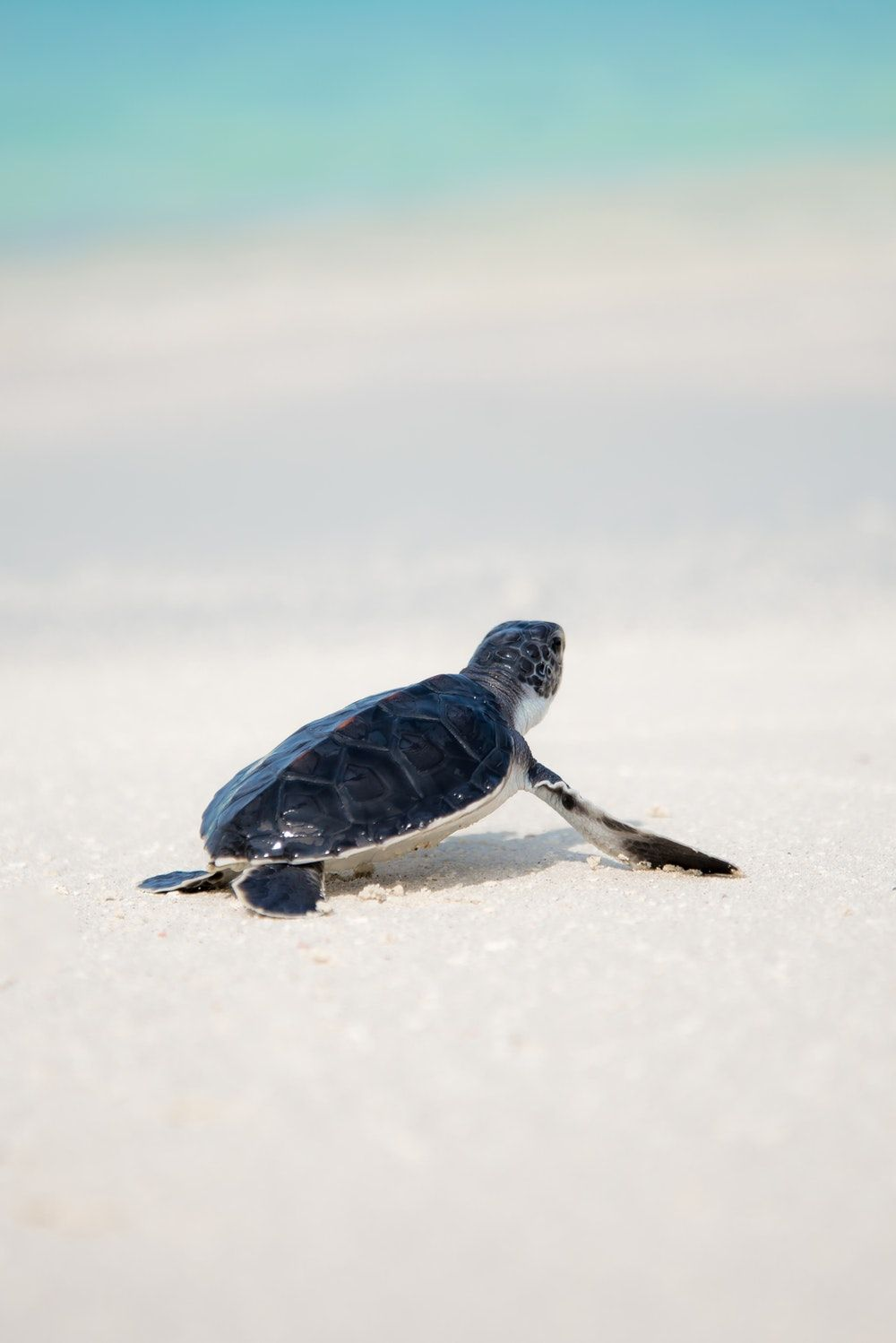 1000x1498 500+ Turtle Pictures | Download Free Images on Unsplash