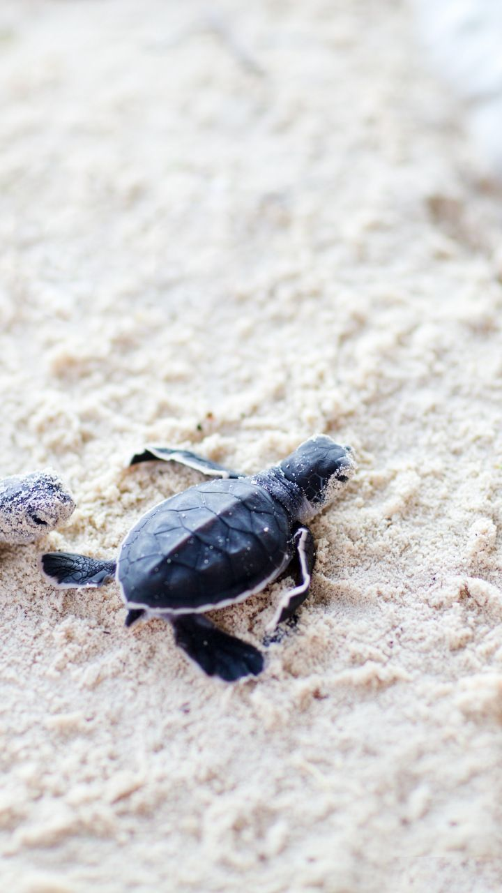 720x1280 Cute, baby, turtles, sand, 720x1280 wallpaper | Animals Wallpapers ...