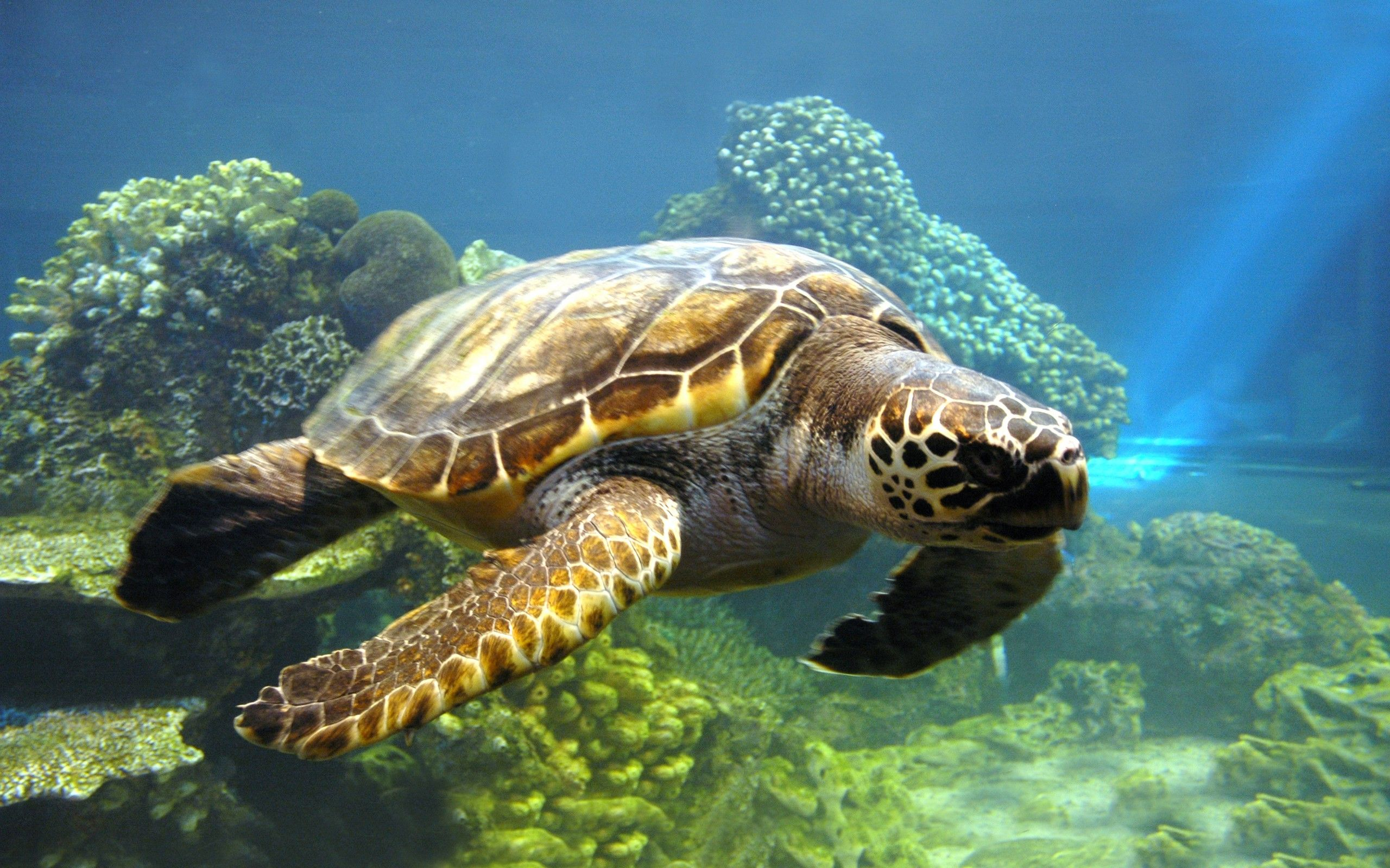 2560x1600 Free 3d Turtles Photography Hd Wallpapers Download