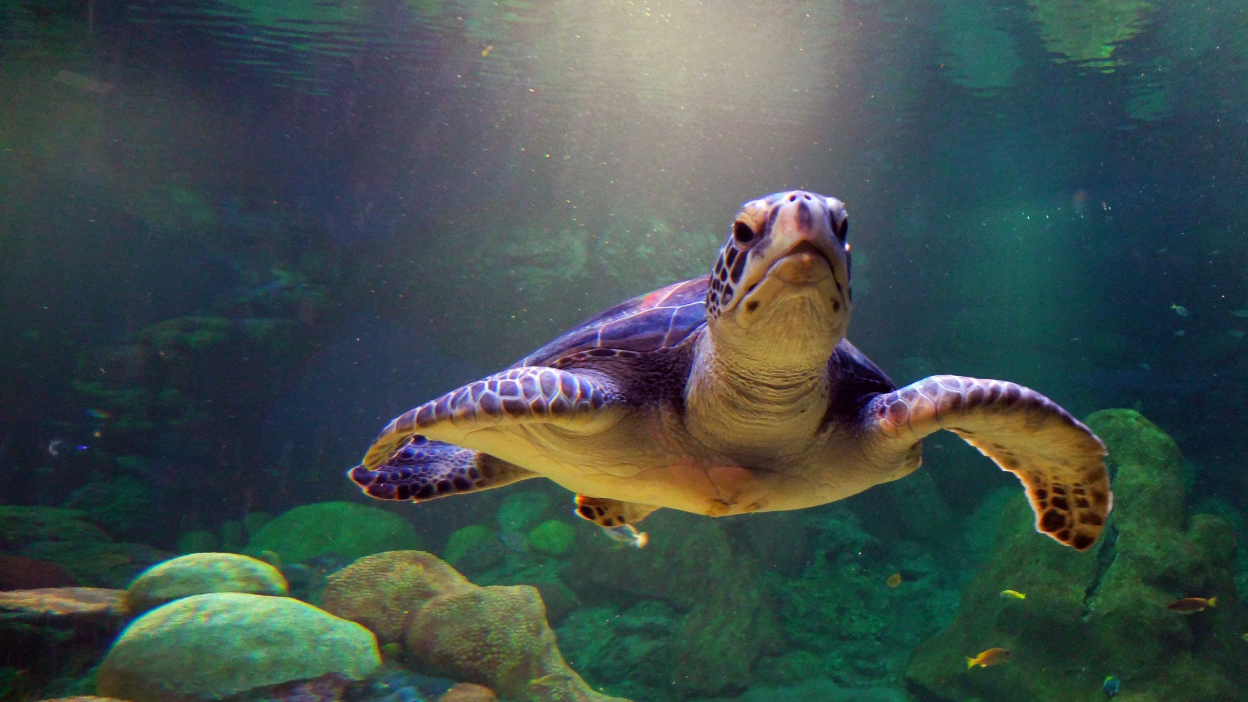 2560x1440 Turtle Wallpaper Image Group (31+)