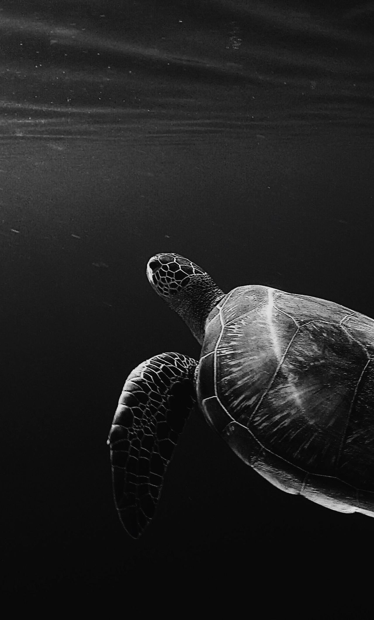 1280x2120 1280x2120 Turtle Oled 4k iPhone 6+ HD 4k Wallpapers, Images ...