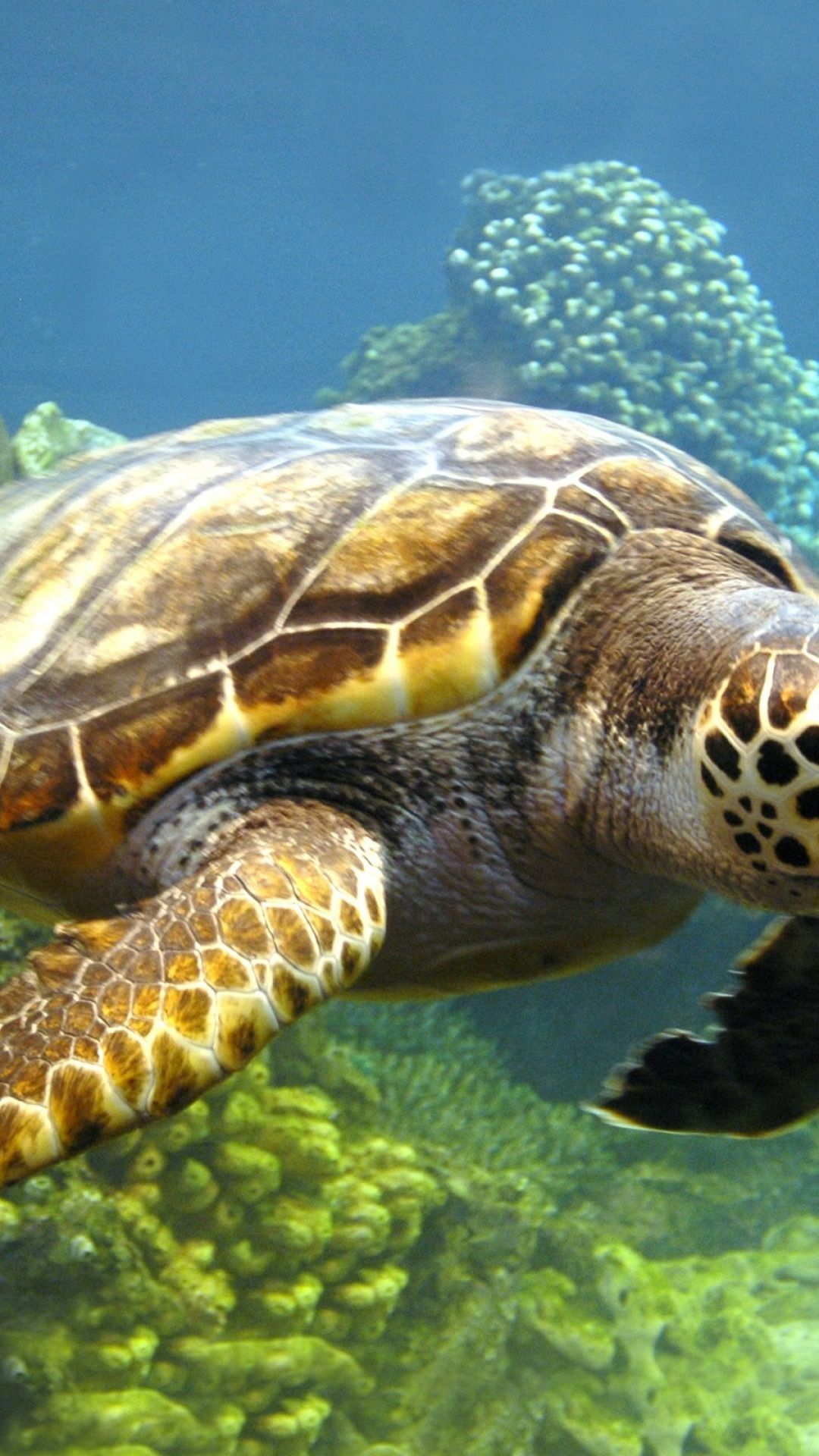 1080x1920 Free 3d Turtles Photography Hd Wallpapers Download