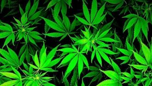 Cool Weed Wallpapers – Top Free Cool Weed Backgrounds