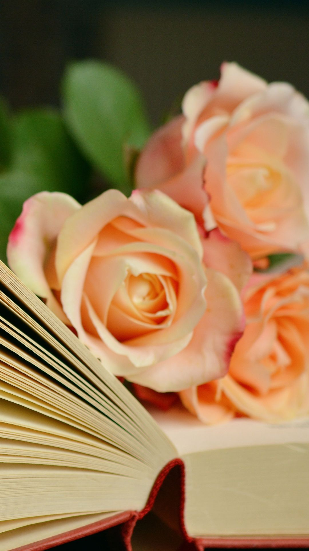 1080x1920 Book Roses Bouquet Reading #iPhone #6 #plus #wallpaper | iPhone 6~8 ...