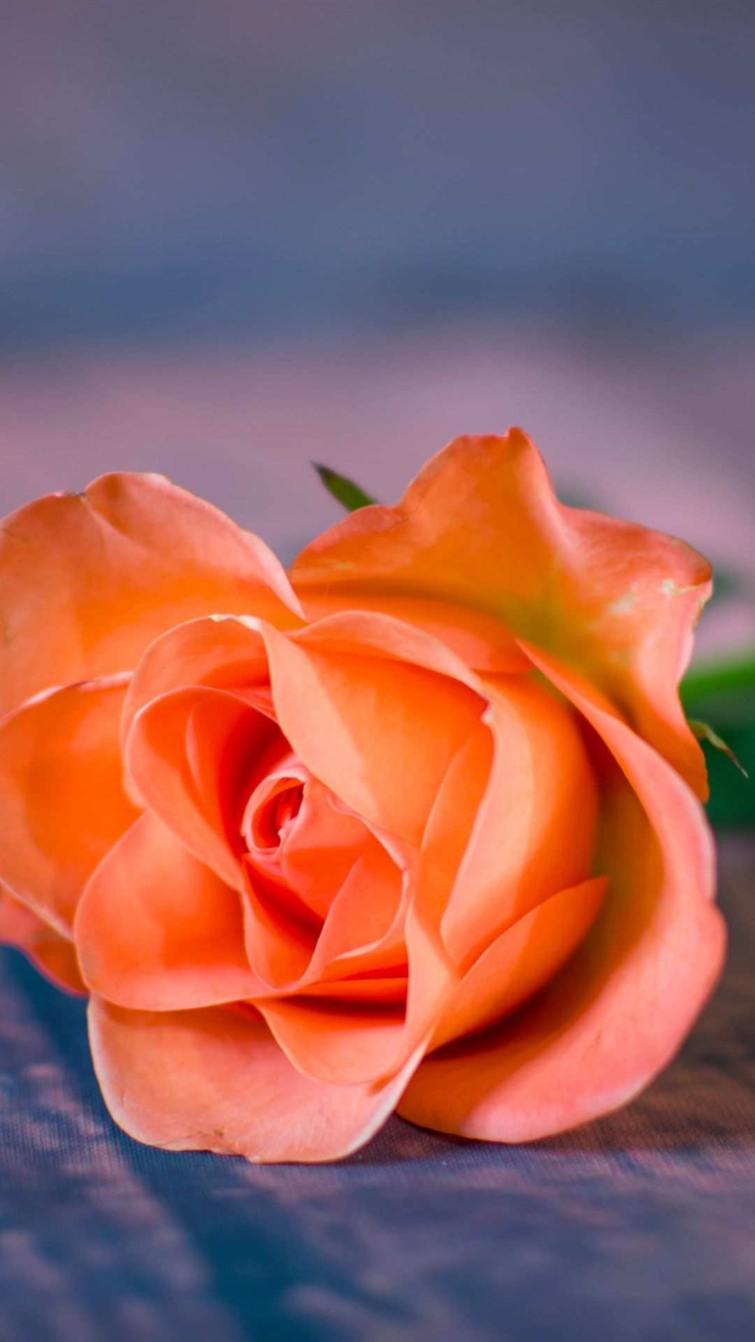 1080x1920 Orange rose close-up, bokeh 1080x1920 iPhone 8/7/6/6S Plus wallpaper ...