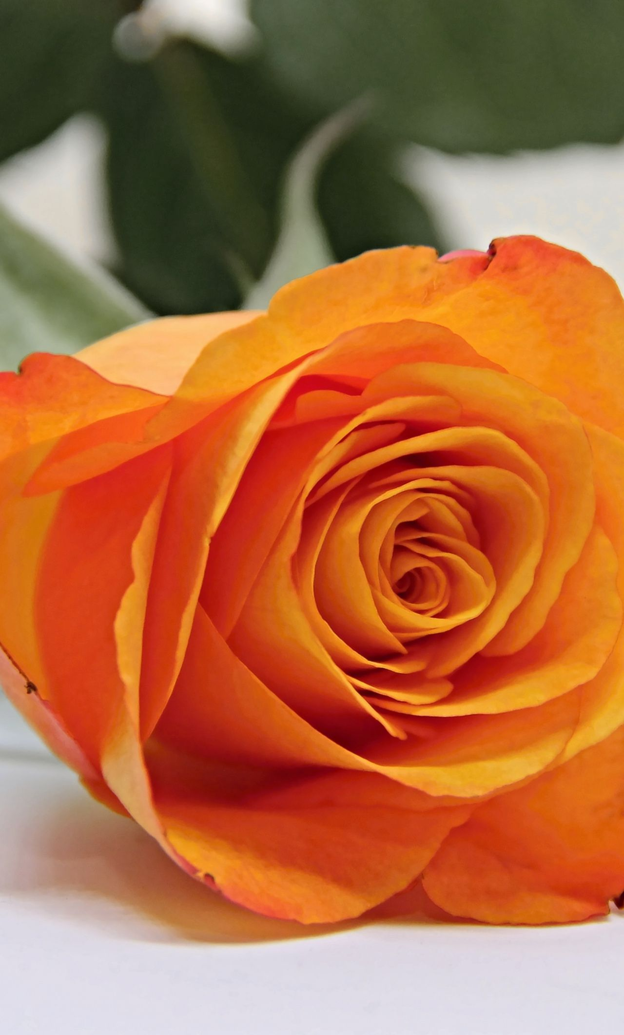 1280x2120 Download 1280x2120 wallpaper orange rose, bud, flower, iphone 6 plus ...