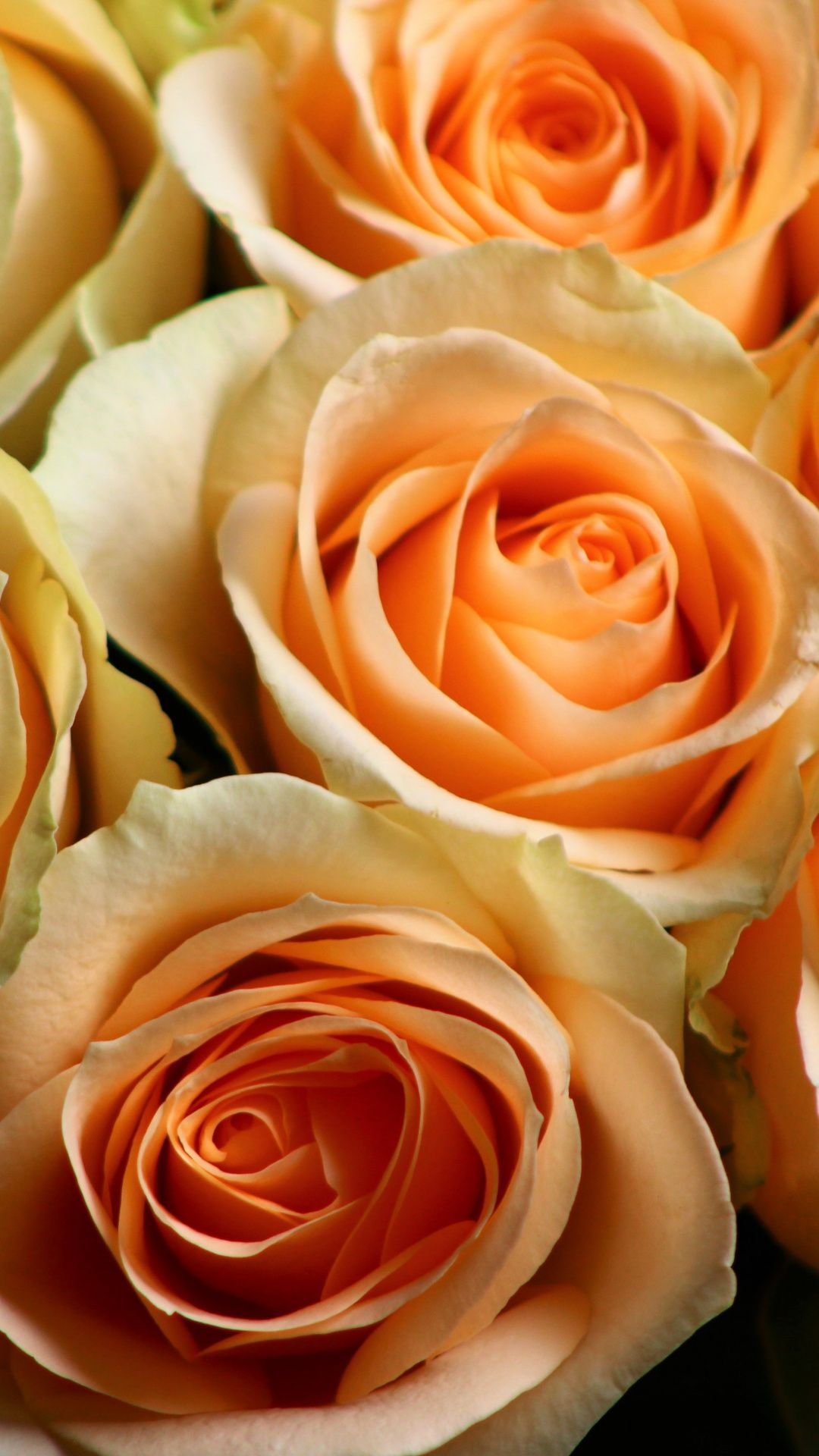 1080x1920 Downaload Orange, roses, bouquet, close up wallpaper for screen ...