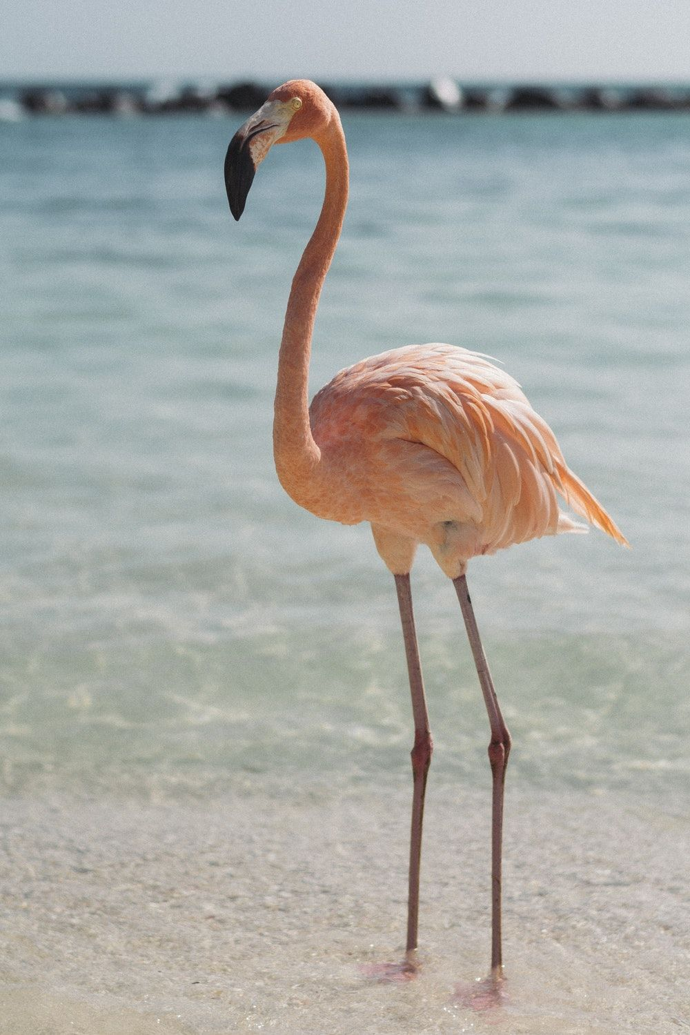 1000x1500 Flamingo Pictures [HD] | Download Free Images on Unsplash