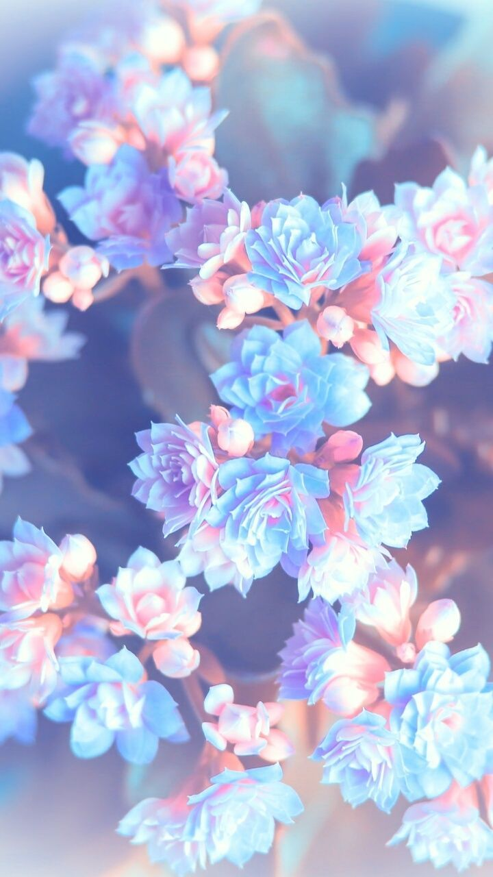 720x1280 Pin by Megan Yee on Flowers | Wallpaper, Iphone wallpaper, Wallpaper ...