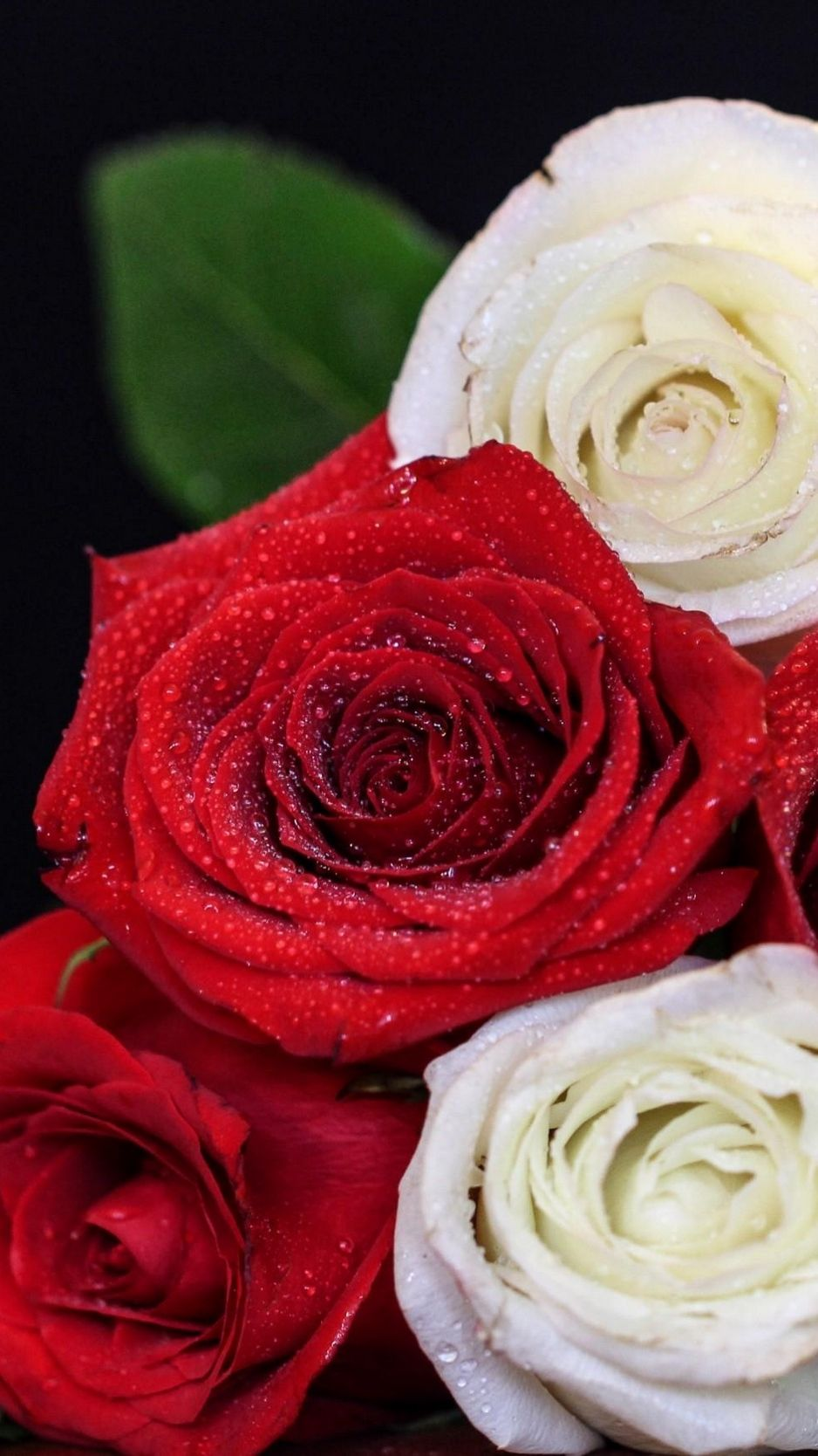 938x1668 Download wallpaper 938x1668 rose, bouquet, red, white, drop ...