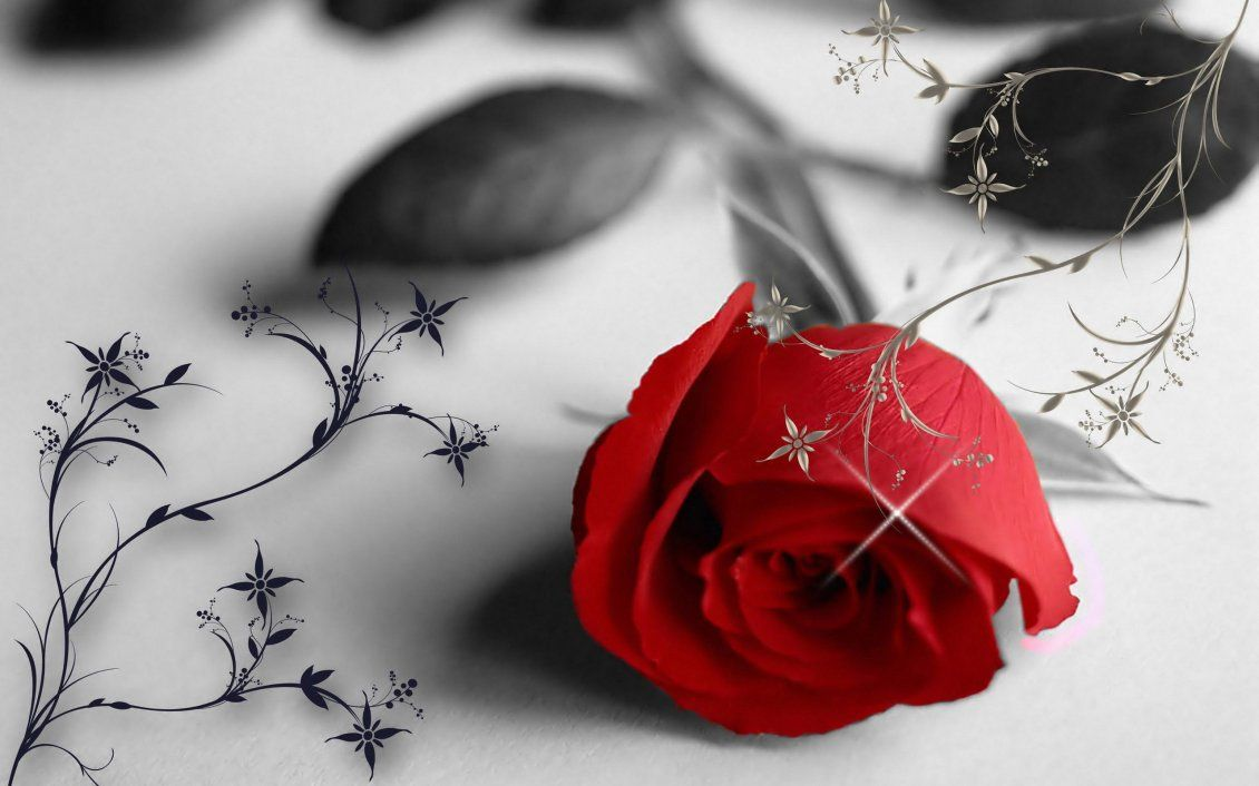 1130x706 Red rose in a black and white wallpaper - love moments