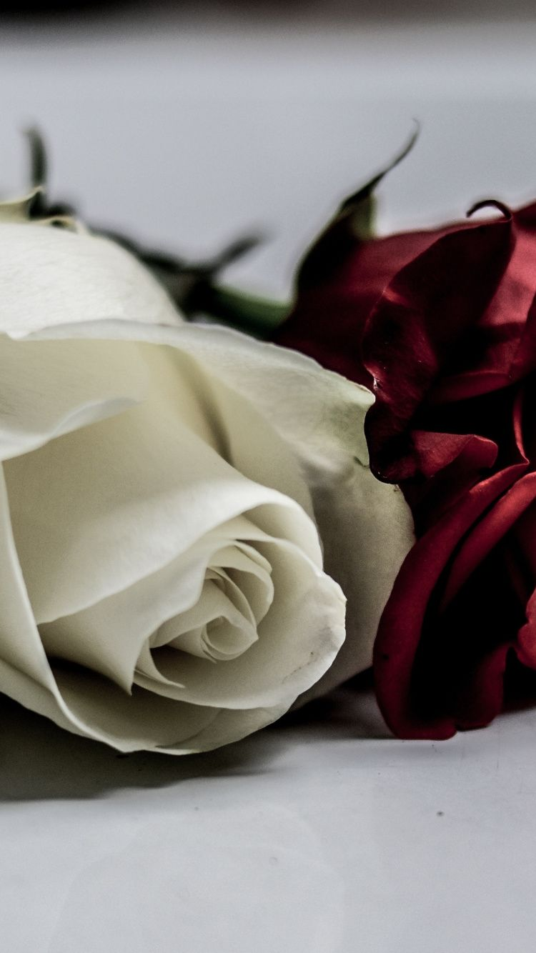 750x1334 Download 750x1334 wallpaper white & red roses, flowers, iphone 7 ...