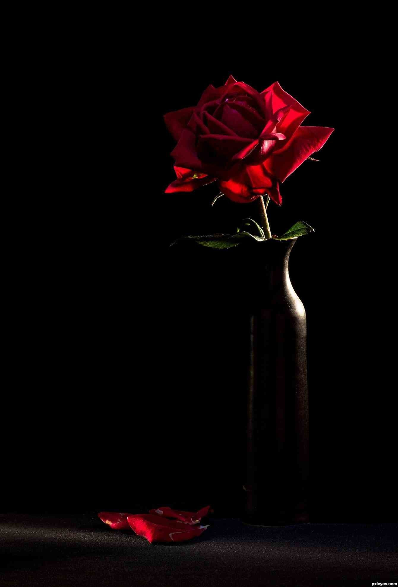 1340x1975 Red Rose with Black Background (42+ images)