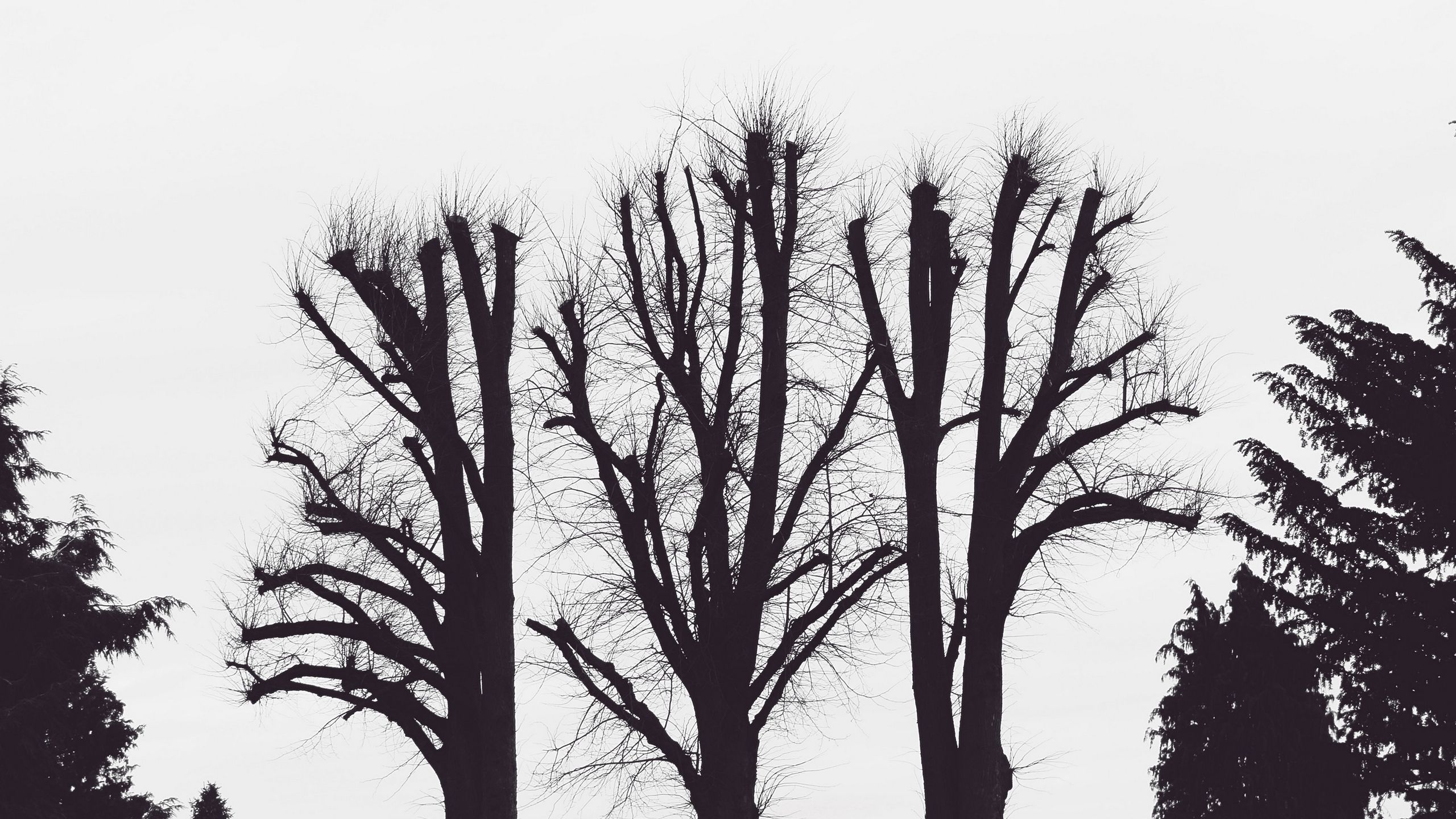 2560x1440 Download wallpaper 2560x1440 trees, branches, aesthetic, bw ...