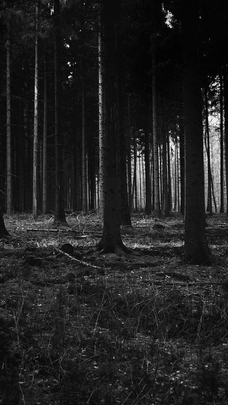 750x1334 iPhone7papers - mj53-forest-dark-scary-night-trees-nature