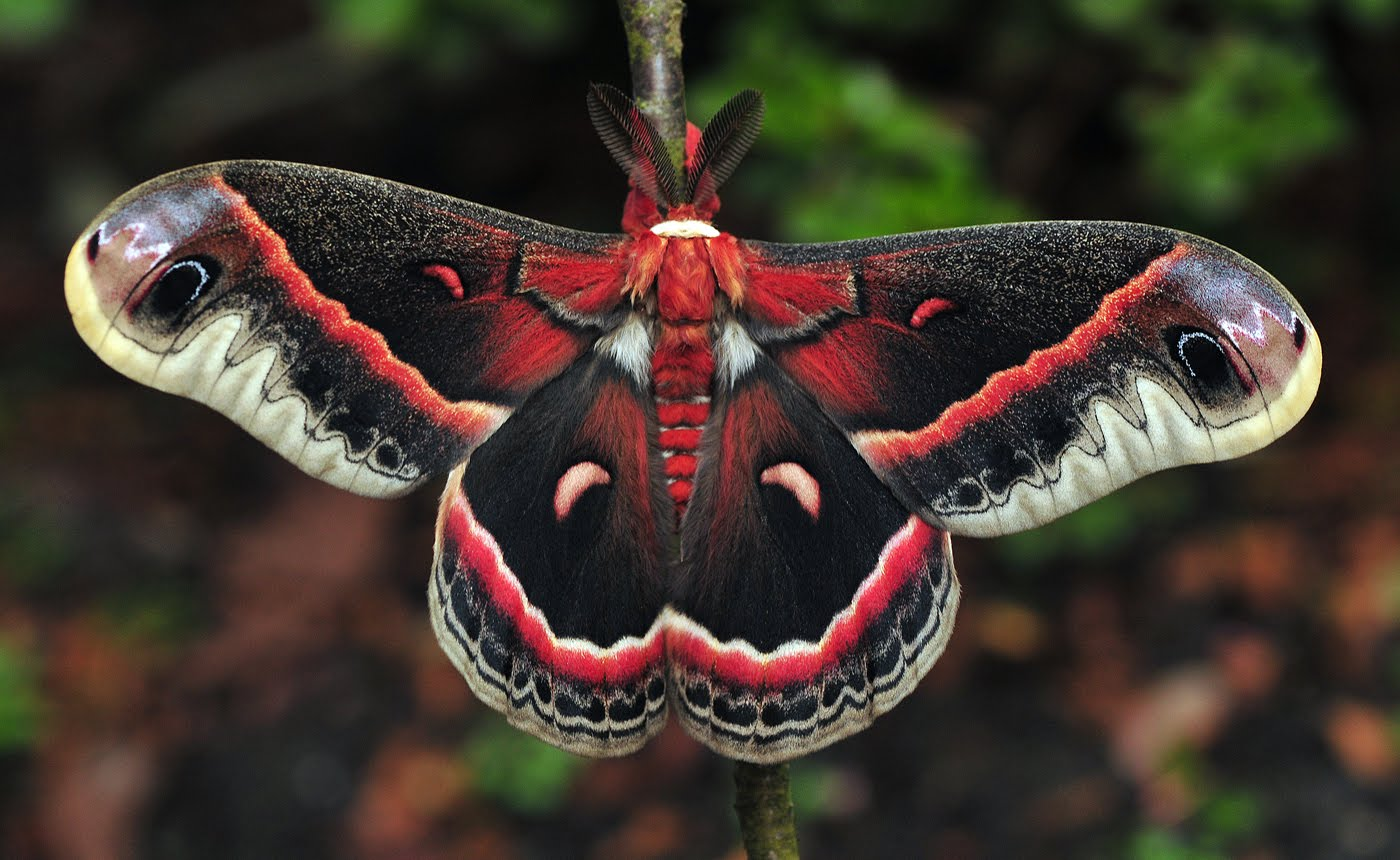 1400x860 Moths Wallpapers High Quality | Download Free