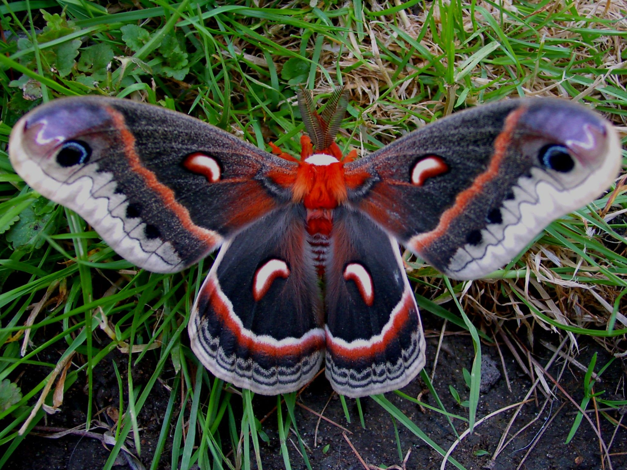 2048x1536 Moths Wallpapers High Quality | Download Free