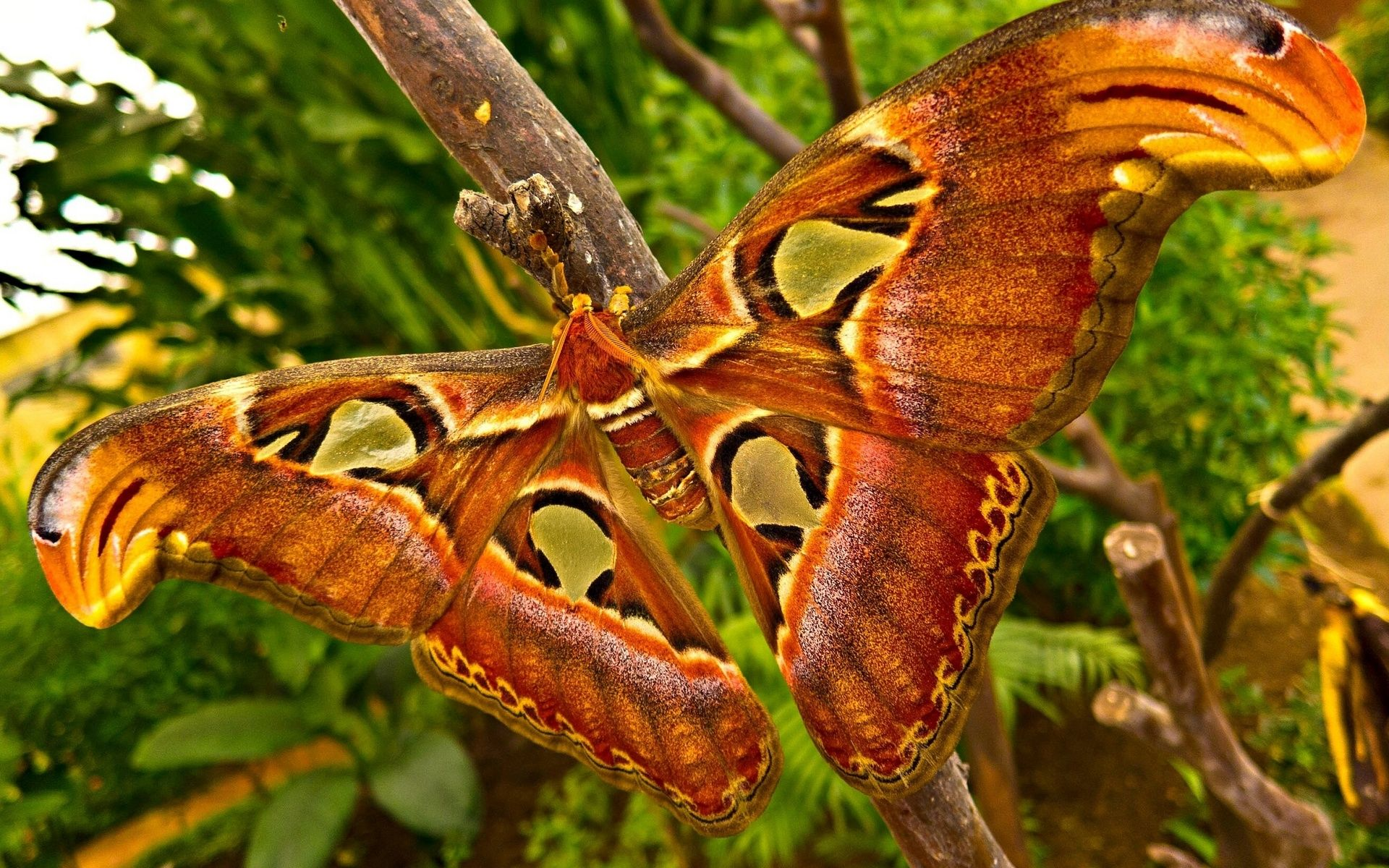 1920x1200 animals, Insects, Moth, Butterfly, Wings, Colors, Contrast, Trees ...