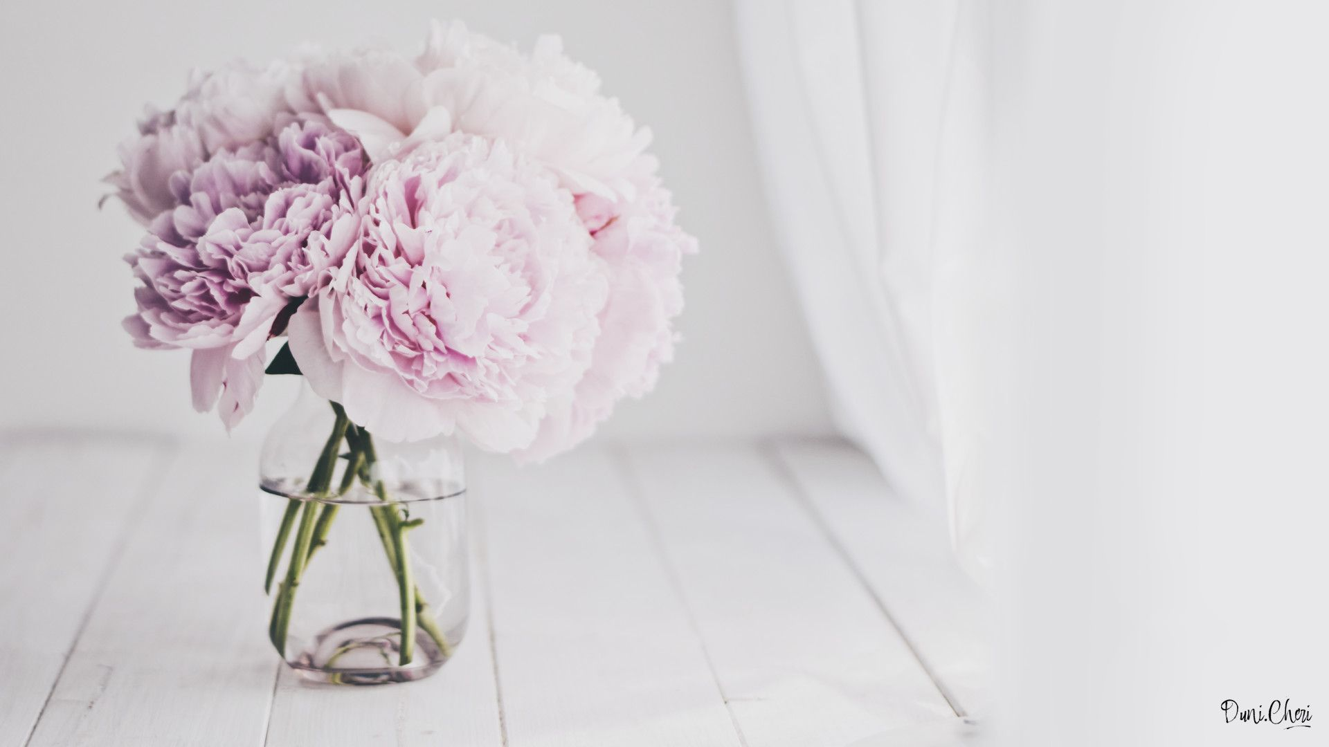 1920x1080 54+ White Peony Wallpapers on WallpaperPlay