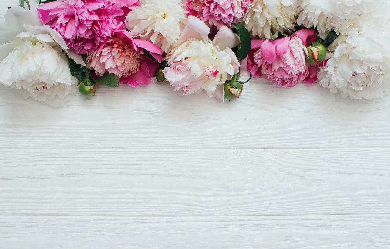 1332x850 Wallpaper Flowers, White, Pink, Peonies, Wooden background images ...