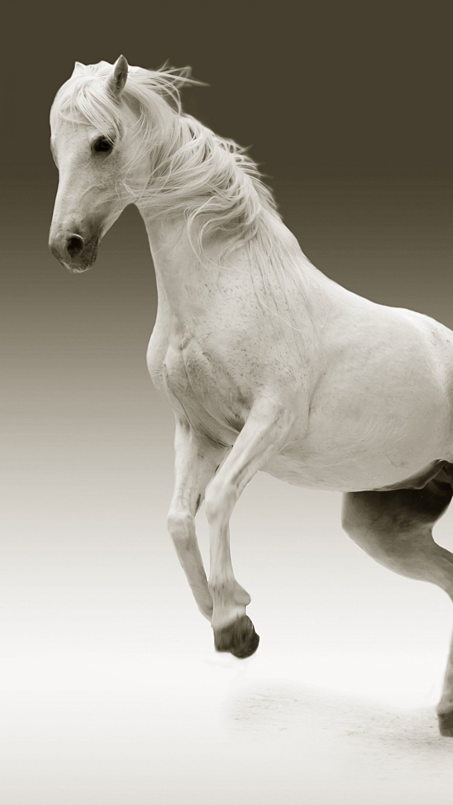 1440x2560 White Horse Wallpaper - iPhone, Android & Desktop Backgrounds