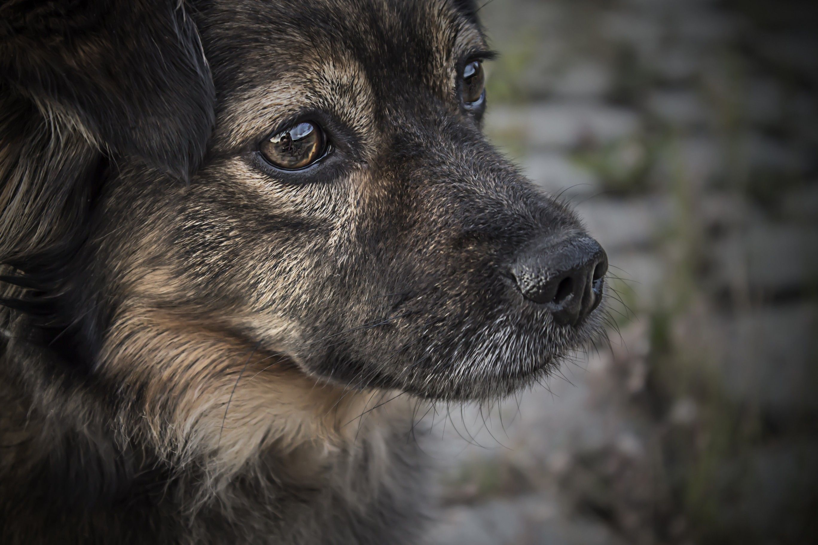 2736x1824 Download 2736x1824 Dog, Baby, Muzzle, Face View, Puppy Wallpapers ...