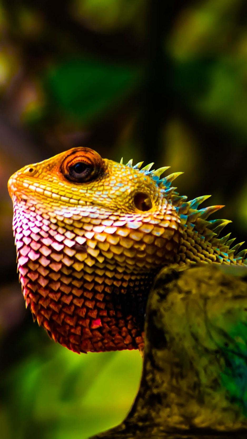 938x1668 Download wallpaper 938x1668 iguana, reptile, scales, color iphone 8 ...