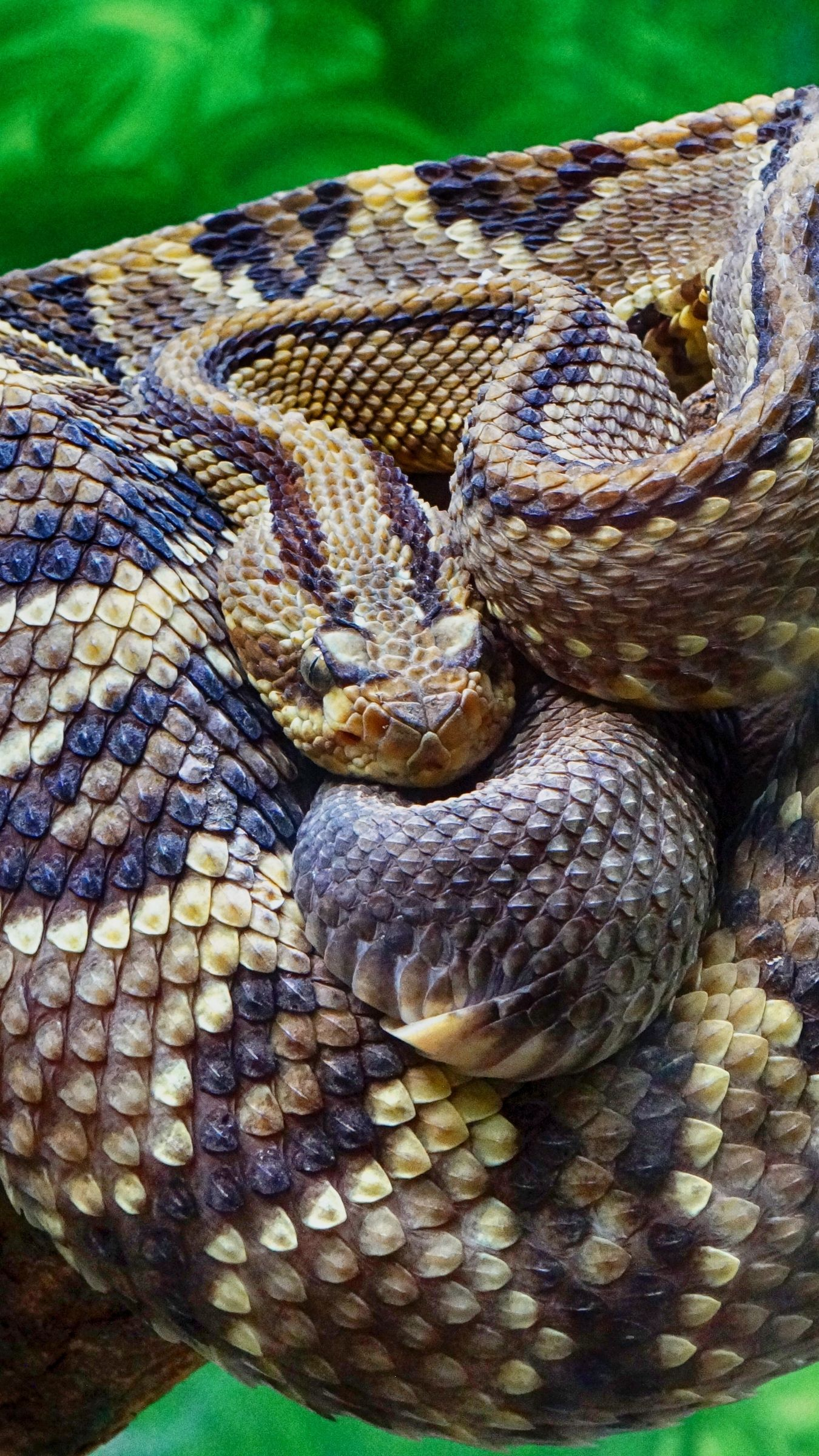 1350x2400 Download wallpaper 1350x2400 rattlesnake, snake, scales iphone 8+/7+ ...