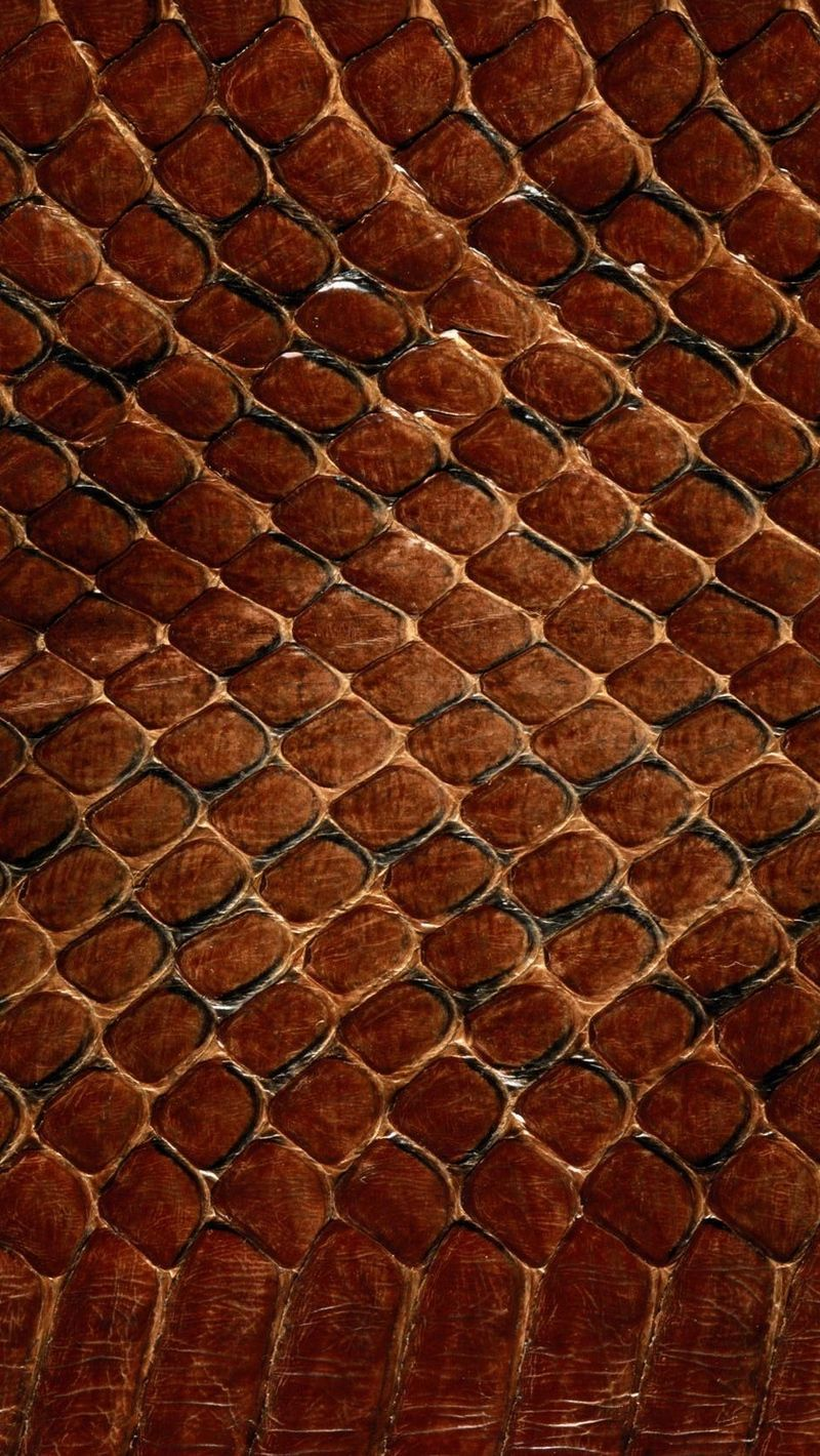 800x1420 Download wallpaper 800x1420 texture, leather, snake, scales ...