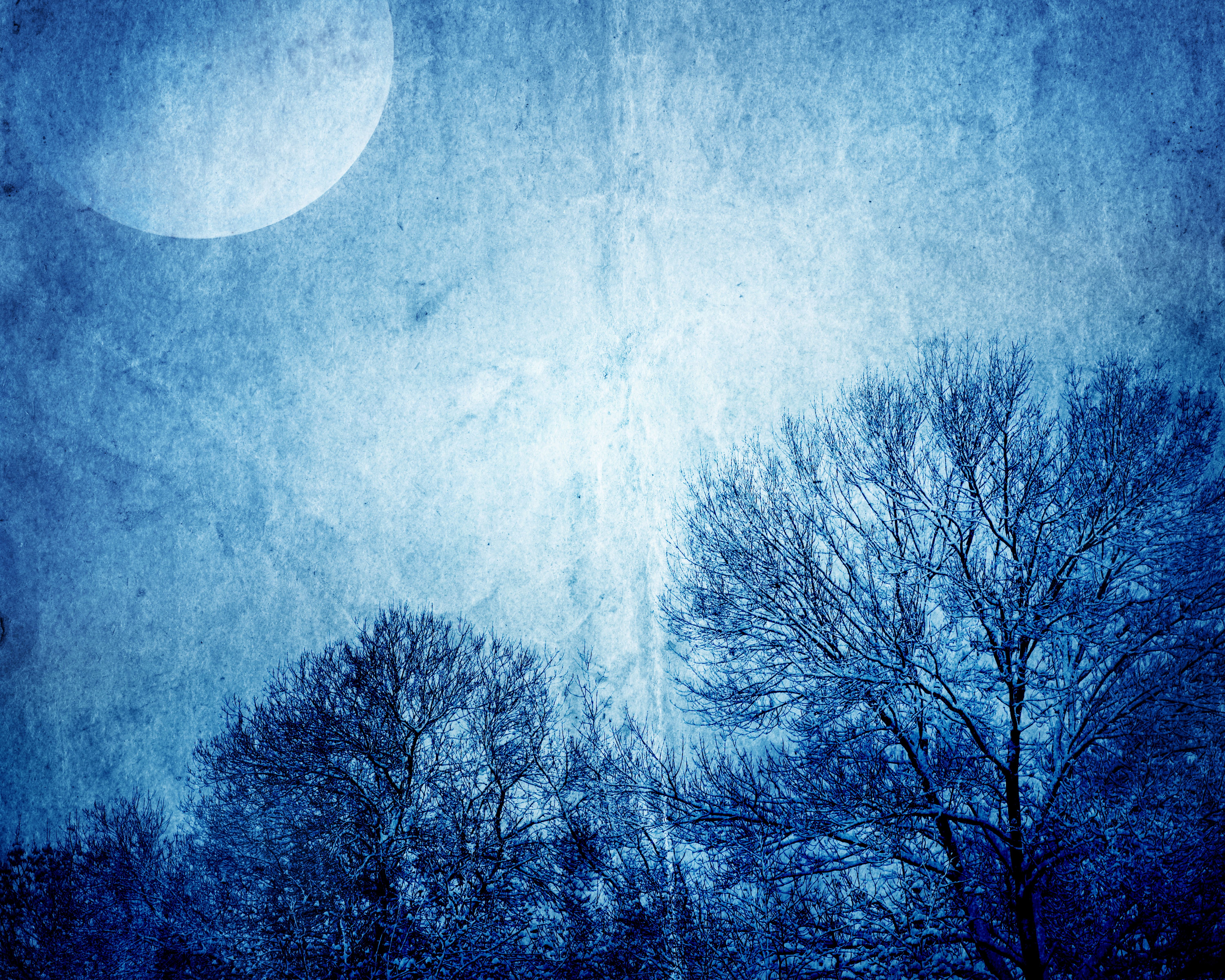 6000x4800 Photo Nature Sky Moon Branches night time 6000x4800