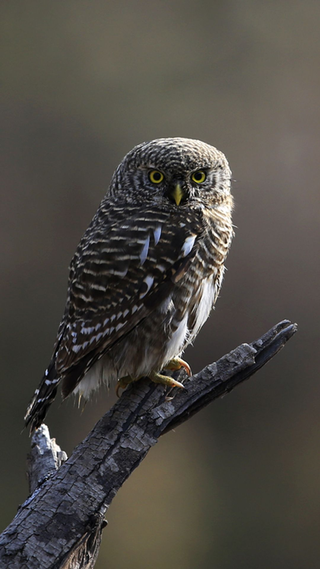 1080x1920 Interesting Young Owl - Wallpapers for iPhone