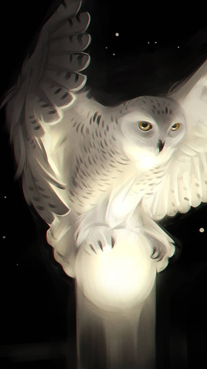 720x1280 White #owl Phone Wallpaper | Wallpapers For iPhone and Android | Owl ...