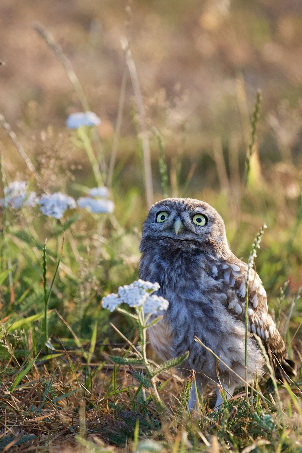 1000x1500 Little Owl Pictures | Download Free Images on Unsplash