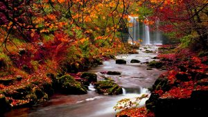Fall Background for Computer 60+