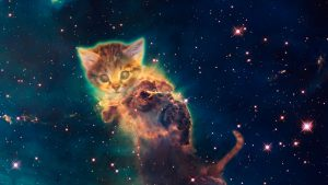 Space Cat Wallpaper 63+