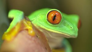 Tree Frog Wallpaper 64+