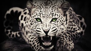 Cool Animal Wallpaper 58+