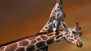 Cute Giraffe Wallpaper 62+