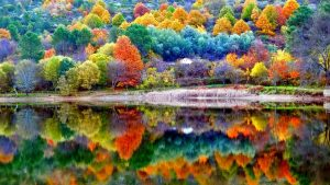 Fall Scenery Wallpaper for Computer 48+