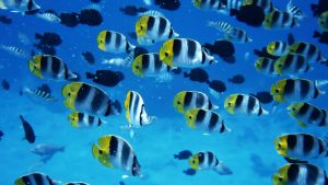 Fish Backgrounds 65+