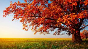Screensavers and Wallpaper Autumn Scene 53+