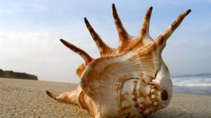 Seashell Backgrounds 43+