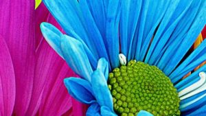 Wallpaper Pink and Blue Flowers 33+